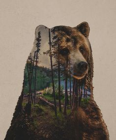 Bear Lake Art Print by Davies Babies                              …