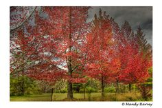 Autumn In Australia Photography Serene Peaceful Home by BeadsMe, $23.00