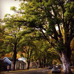Autumn in Arrowtown, New Zealand