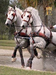 dales ponies - Bing Images