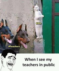 My reaction When I see my teachers in public 😀 The post My reaction : When I see my teachers in public appeared first on Gag Bee. Very Funny Memes, Funny Fun Facts, Latest Funny Jokes, Funny School Memes, Cute Funny Quotes, Some Funny Jokes, Funny Puns, Funny Laugh, Funny Relatable Memes