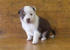 NO SHARES!!! I´m JUST A BABY but I was dumped to a HIGH KILL SHELTER. I´m here with my siblings. CAN YOU HELP US? We want to LIVE!!! Located at Odessa Animal Shelter  https://www.facebook.com/speakingupforthosewhocant/photos/pb.248355401855372.-2207520000.1395951809./748940905130150/?type=3&theater