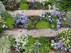 Pretty little steps lined with flowers. I wonder where they lead?