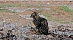Gatti di Roma (The Cats Of Rome)