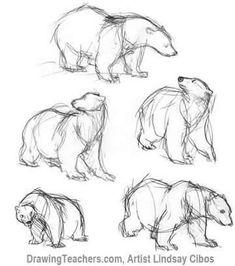 Cartoon polar bear wearing scarf stock illustration - best p Animal Sketches, Animal Drawings, Drawing Sketches, Sketching, Cartoon Drawings, Art Drawings, Polar Bear Drawing, Bear Sketch, Bear Art
