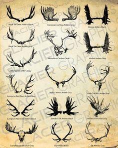 antler clipart elements 16 deer elk moose antlers clip art instant digital download. Black Bedroom Furniture Sets. Home Design Ideas