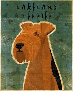 Lakeland Terrier Print 8 x 10 Print