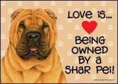 Love Is Being Owned Shar Pei
