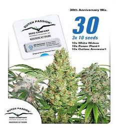 Dutch Passion 30th Anniversary Seeds www.420-cannabis-seeds.uk