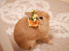 * * * お久しぶりの花冠 @pitapoteto さんの花冠です(˶′◡‵˶) . #うさぎ #ふわもこ部 #ネザーランドドワーフ #igersjp #netherlanddwarf #instaanimal #rabbit #rabbitstagram #lapin  #bunny #bunnystagram #lumixgm1 #愛しのこはる