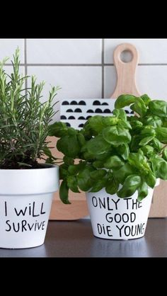 Inspiring Diy Herb Pots For Indoors And Outdoors. Below are the Diy Herb Pots For Indoors And Outdoors. This post about Diy Herb Pots For Indoors And Outdoors was posted under the Home Decor Ideas category by our team at September 2019 at pm. Herb Garden, Indoor Garden, Garden Pots, Indoor Plants, Outdoor Gardens, Potted Plants, Comment Planter, Kitchen Herbs, Herb Pots