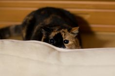 隠れたつもりw(She thinks the she hid :D ) by ryoichi360, via Flickr