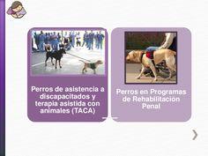 Perros de asistencia a discapacitados y terapia asistida con animales (TACA) Perros en Programas de Rehabilitación Penal