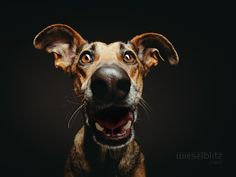 37 Pet Photos to Amaze and Inspire You: Suspense by Elke Vogelsang via 500px