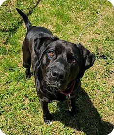 Lisbon, OH - Labrador Retriever Mix. Meet Wink, a dog for adoption. http://www.adoptapet.com/pet/18184225-lisbon-ohio-labrador-retriever-mix