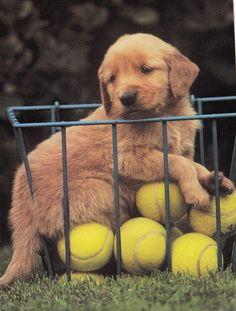 Kids Scrapbooking Collectible Puppy Tennis Balls STICKER Decal Animals Retriever