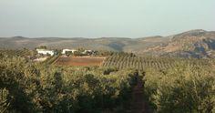 Resultado de imagen de campo andaluz