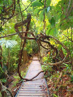 Hiking Taman Negara National Park, Malaysia