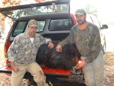 One of the largest hog's I ever caught with dogs. He weighed 408 lbs and had 3 1/2 tusks. Held him with 4 bulldogs. Guy on left, Terry K. Akers helped me with the dogs on this guided hunt for two guys from Illinois.