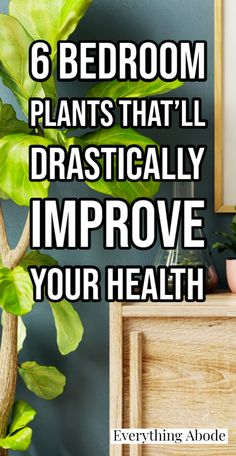 Best Indoor Plants, Outdoor Plants, Air Plants, Outdoor Gardens, Cheap Plants, Household Plants, Inside Garden, Coconut Health Benefits, House Plants Decor
