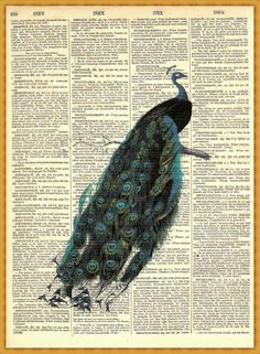 gorgeous peacock print on a page from an 1873 French dictionary