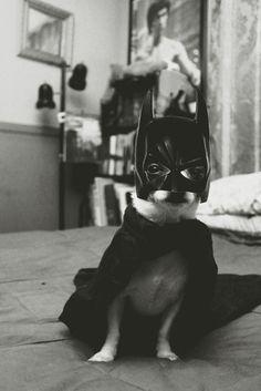 Bat Chiwawa
