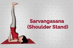 is good for the healthy functioning of many organs of our body. Thus, it regulates the functions of all the glands of the body. Learn Yoga, How To Do Yoga, Shoulder Stand Yoga, Knee Exercises, Stretches, Yoga Transformation, Fat Burning Cardio, Yoga Mantras, Yoga Fashion