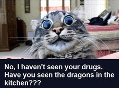 No, I haven't seen your drugs. Have you seen the dragons in the kitchen??? Funny cat picture. Big eyes. Humor.