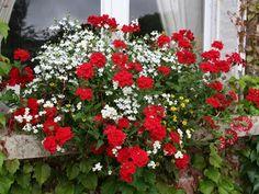 plantes et feuilles pour jardini res estivales fleurs. Black Bedroom Furniture Sets. Home Design Ideas