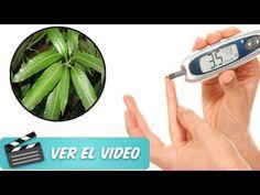 ¿Tienes Diabetes Sólo Hierve Estas Hojas Y Combate Tu Problema Sin Medic...