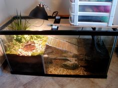 turtle terrarium ideas - Google Search