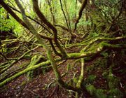 Rob Blakers is a wonderful photograher of Tasmanian forests