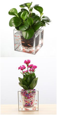 Desktop Balcony Decor Transparent Flower Planter Fish Tank