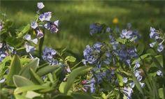 Video - Top Shade Garden Plants | bhg.com