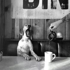 Coffee with Maddie. Atlanta, GA. © Maddie The Coonhound.