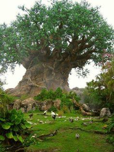 Baobab,Tree of Life, Africa