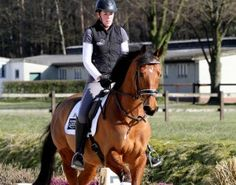 Taking Thoroughbreds from Race Track to Dressage Ring: Part I
