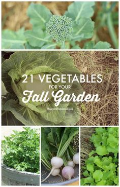 vegetables to plant in fall garden. Great tips and ideas on when to plant in here. Awesome links too.