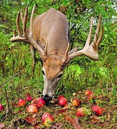 Plant These Fruit Trees to Put Bucks in Bow Range   Field & Stream