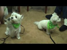Therapy Dogs Doing Tricks at Cancer Treatment Centers of America