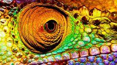 Chameleon Eye, Ranomafana, Madagascar holidays