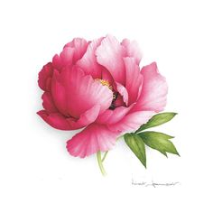 Pink peony, french artist. Click to see site