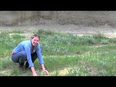 Big Muddy Bandlands Saskatchewan - The Great Canadian Bucket List Saskatchewan Canada, Ice Age, The Province, Us Travel, Homeschool, Castle, Bucket, Big, Heart