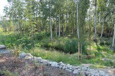 Garden Finland, Stepping Stones, Garden, Outdoor Decor, Plants, Home Decor, Stair Risers, Garten, Decoration Home