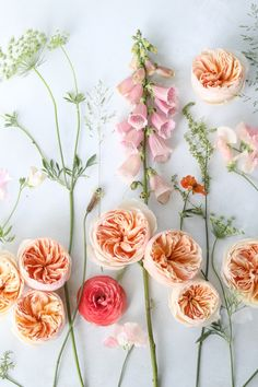 Juliet (Ausjameson) cut rose by David Austin Wedding & Event Roses. We love a #floralflatlay particularly when Juliet is involved!  An opportunity to become mesmerized by Juliet's swirl of petals, forming deep cups as well as her distinctive apricot and peach colour.  How can nature be so perfect?  Photography | @jannelford