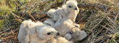 Adlerarena Burg Landskron - Greifvogelpark & Flugschau in Kärnten Park, Owl, Animals, Eagle, Nursing Care, Animales, Animaux, Owls, Parks