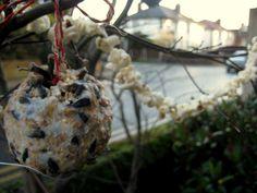 bird feeders!