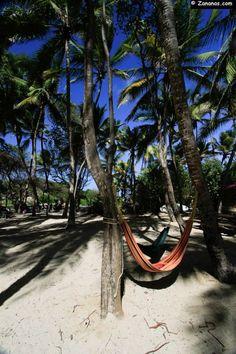 Hamocs under the coconuts. Cap Chevalier, Martinique.