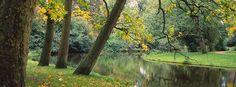 Trees near a Pond Vondelpark Amsterdam http://www.walls360.com/seasons-wall-graphics-s/2002.htm