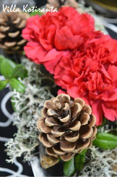 Jouluinen kukka-asetelma vanhaan kakkuvuokaan / Beautiful, Christmas flower arrangement, created into an old cake tin Christmas Table Settings, Christmas Home, Flower Arrangements, Succulents, Flowers, Plants, Beautiful, Floral Arrangements, Succulent Plants